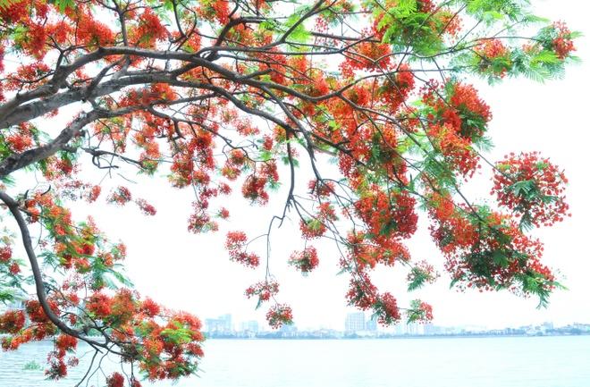 Ho Tay tho mong trong long Ha Noi hinh anh 14