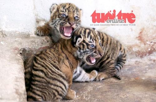 Ho Dong Duong Thao Cam Vien Sai Gon sinh 5 con hinh anh 4