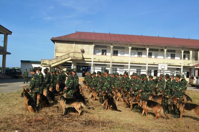 Hang chuc cho nghiep vu duoc dieu den Vung Ang hinh anh 1 Lực lượng Biên phòng và chó nghiệp vụ vừa được bổ sung đã có mặt tại KKT Vũng Áng.