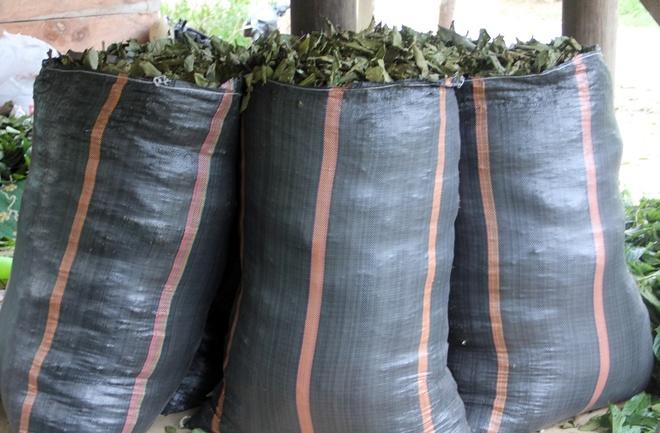 Do xo vao rung hai la chua ke ban cho thuong lai la hinh anh 7 Những bì lá chua ke khô được đóng sẵn chờ xe của thương lái đến bốc đi nhập.
