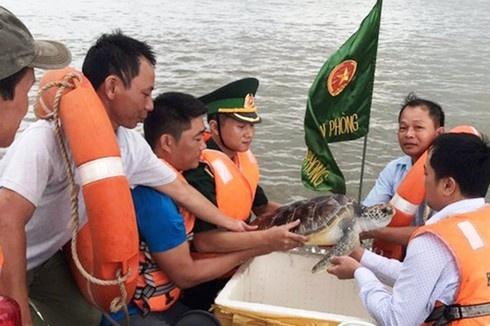 Thả rùa quý hiếm nặng 11 kg về biển