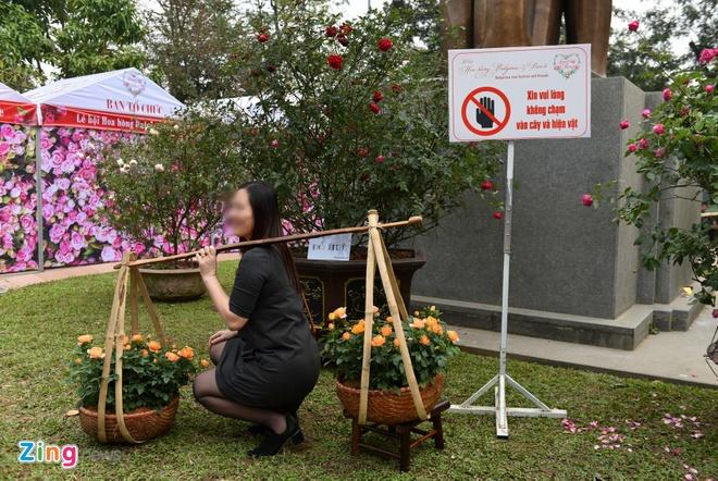 Le hoi hoa hong Bulgaria gay that vong vi khac xa quang cao hinh anh