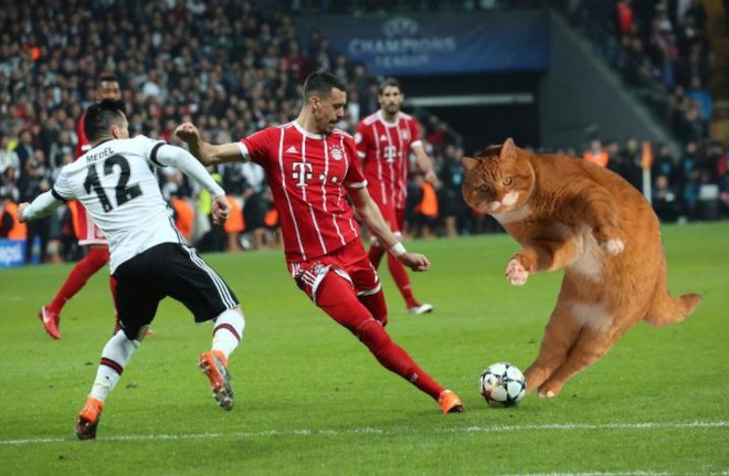 Tran dau cua Bayern bi gian doan vi mot chu meo hinh anh