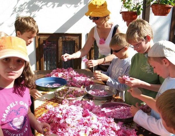 le hoi hoa hong Bulgaria anh 12