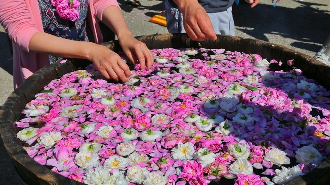 le hoi hoa hong Bulgaria anh 11