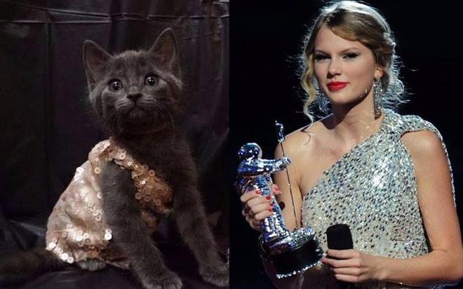Nu bac si 'len do' cho meo giong het Taylor Swift hinh anh