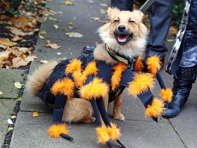 Nhung chu cho hoa trang Halloween 'chat hon ca chu' hinh anh