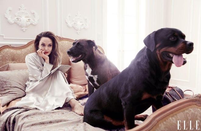 Angelina Jolie khoe nhan sac man ma o tuoi 44 hinh anh 7