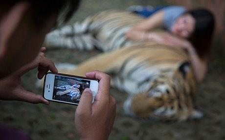 Du khach bi ho vo o Phuket, Thai Lan hinh anh 3 Du khách chụp ảnh ở Tiger Kingdom. Ảnh: Gettyimages