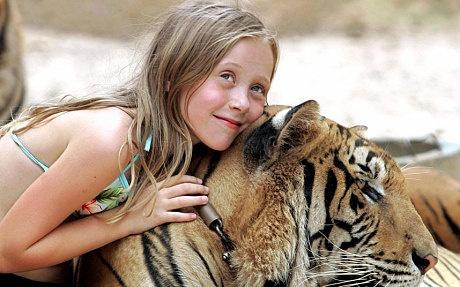 Du khach bi ho vo o Phuket, Thai Lan hinh anh 4 Một cô bé chụp ảnh cùng hổ ở Tiger Tample. Ảnh: Gettyimages