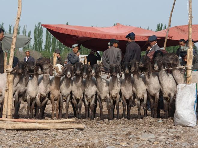 Chợ gia súc, Bukhara, Uzbekistan: Vài khu chợ trên thế giới bán đủ mọi thứ, những chợ khác đặc biệt hơn và chỉ bán một loại sản phẩm, như dê chẳng hạn. Chợ gia súc họp vào Chủ Nhật hàng tuần này cách thành phố cổ Bukhara, Uzbekistan một khoảng không xa. Ảnh: Cntraveler.com