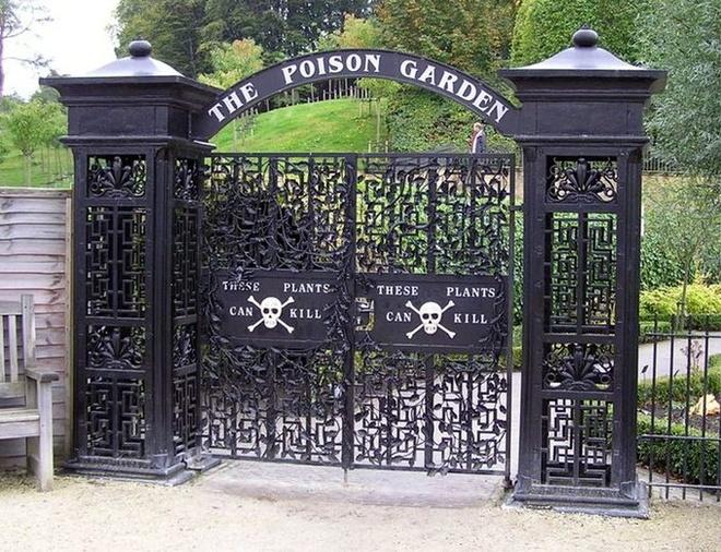 2. Vườn Alnwick: Vì những khu vườn bình thường không tạo cảm giác phiêu lưu, Jane Percy, Nữ công tước xứ Northumberland, quyết định biến khu vườn của lâu đài Alnwick mà bà được thừa kế thành một nơi đặc biệt. Ban đầu, bà cho trồng một số cây thuốc, nhưng rồi nhận ra những loại cây có độc thú vị hơn nhiều. Cuối cùng bà đã tạo ra Vườn Độc Dược, với cảnh cổng gắn biển cảnh báo và những loại cây có thể gây chết người. Dù du khách ở cách các loại cây một khoảng khá an toàn và không được ngửi hay sờ vào chúng, vài người đã ngất xỉu vì hít phải khí độc một số loại cây thải vào không khí.