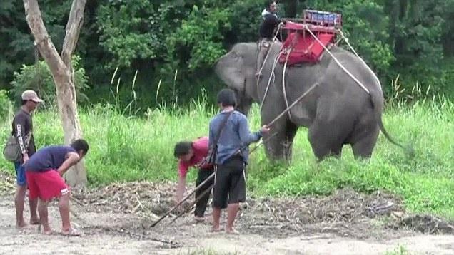 Con voi đã dẫm chết quản tượng và bỏ chạy với hai du khách trên lưng. Ảnh: The Independent