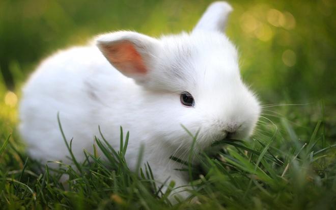 """Nhung dieu me tin la lung nhat the gioi hinh anh 9 11. Anh: Khi bạn thức dậy vào ngày đầu tiên trong tháng, việc nói """"con thỏ"""", """"những con thỏ"""" hoặc """"những con thỏ trắng"""" sẽ đem lại may mắn cho bạn suốt cả tháng. Nhưng hãy nhớ đó phải là những từ đầu tiên bạn nói."""