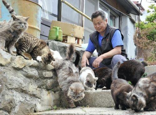 """10. Đảo mèo Tashirojima, Nhật Bản: Với dân số chỉ khoảng 100 người, nơi này đã trở thành """"đảo mèo"""" do lượng mèo hoang phát triển mạnh. Người dân nơi đây tin rằng việc cho mèo ăn sẽ đem lại sự giàu có và may mắn. Ở đây còn có đền thờ mèo và cuộc thi chụp ảnh mèo diễn ra hàng năm. Các du khách, đặc biệt là những người yêu loại thú cưng này, đổ về đây để được vuốt ve những chú mèo mập ú, thân thiện và không hề sợ người."""