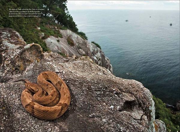"""5. Đảo rắn Ilha de Queimada Grande, Brazil: Hòn đảo nằm cách thành phố São Paulo chưa đầy 150k với diện tích 400.000m2 này là nhà của 2.000-5.000 con rắn hổ lục đầu vàng, một trong những loài rắn độc nhất thế giới. Nọc độc của loài rắn này độc đến mức có thể """"làm thịt người tan chảy"""". Chúng sống nhờ các loài chim di cư dừng chân nghỉ tại đảo. Hải quân Brazil không cho ai lên hòn đảo này, trừ các nhà khoa học, do sự nguy hiểm của nó."""