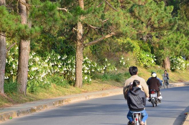 Da Lat - Duyen hay Tinh da giu chan toi hinh anh 2 Nơi nơi đều có sự hiện hữu của hoa