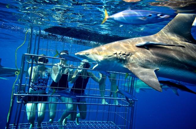"""10. Gansbaai, Nam Phi (hay còn gọi là """"Hành lang cá mập""""): Gansbaii được coi là """"thủ đô của cá mập trắng"""". Cá mập trắng nổi tiếng với những chiếc răng sắc nhọn, mồm rộng và mắt nhìn thấy được, điều đó khiến chúng vừa đáng sợ vừa thú vị. Gansbaii thu hút được nhiều khách du lịch chủ yếu là nhờ cá mập trắng. Nếu muốn có trải nghiệm cảm giác mạnh, bạn có thể lặn trong lồng sắt và đối mặt với chúng. Nếu không đủ liều lĩnh để thử, bạn có thể đi xem cá mập tấn công đàn hải cẩu."""