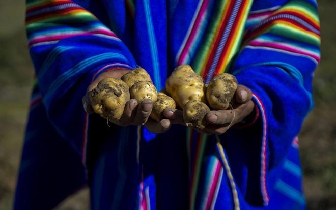 """Nhung cach cau may nam moi doc nhat the gioi hinh anh 2 Peru: Người Peru có rất nhiều phong tục đón năm mới, từ mặc quần áo mới, thắp nến đến viết ra điều ước để đem lại may mắn trong năm tới. Một trong những truyền thống thú vị là đoán xem năm sau sẽ thế nào bằng… khoai tây. Theo truyền thống, ba củ khoai tây sẽ được đặt dưới gầm ghế hoặc sofa, một củ đã gọt, một củ gọt một nửa và một củ chưa gọt. Vào nửa đêm, họ sẽ chọn một củ bất kỳ để dự đoán tình hình tài chính năm sau: củ gọt hết là không gặp may mắn về tiền bạc, củ gọt một nửa là một năm bình thường, và củ chưa gọt là sẽ có một năm """"tiền vào như nước""""."""