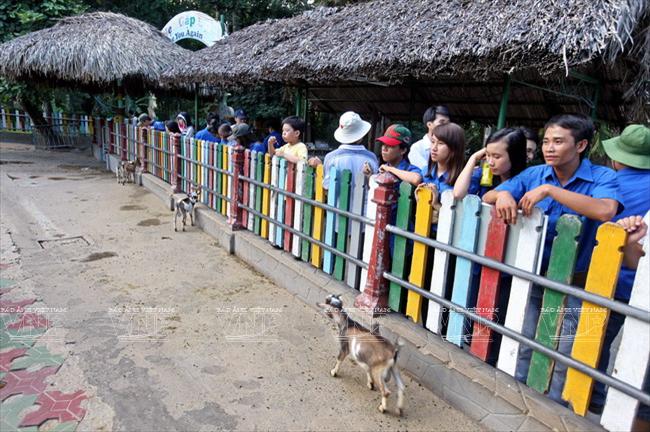 Toi tham mot trong 8 so thu lau doi nhat the gioi o Viet Nam hinh anh 12 Du khách thích thú tham quan khu nuôi dê.