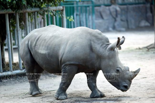 Toi tham mot trong 8 so thu lau doi nhat the gioi o Viet Nam hinh anh 7 Loài tê giác quý hiếm.
