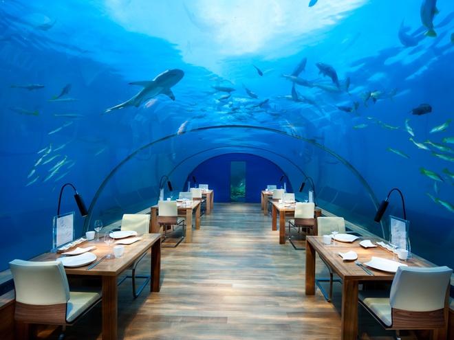 10 diem du lich tuyet nhat hanh tinh nam duoi long bien hinh anh 2 2. Nhà hàng dưới biển Ithaa, Maldives: Ithaa là nhà hàng dưới biển toàn bằng kính đầu tiên trên thế giới, ở độ sâu 5m tại khách sạn Conrad Maldives Rangali Island. Nhà hàng phục vụ món trứng cá hồi và tôm Maldives. Du khách sẽ được thưởng thức đồ ăn trong lúc chiêm ngưỡng toàn cảnh mặt biển phía trên nhà hàng.