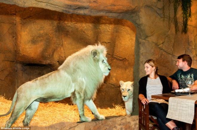 An toi cung su tu, ngu cung gau tai khach san hinh anh 1 Vườn thú quốc gia ở Canberra, Australia vừa quyết định cho ra đời một khách sạn kỳ lạ.