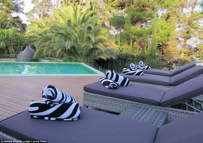 An toi cung su tu, ngu cung gau tai khach san hinh anh 7  Khăn tắm của bể bơi có họa tiết gần gũi với thiên nhiên.