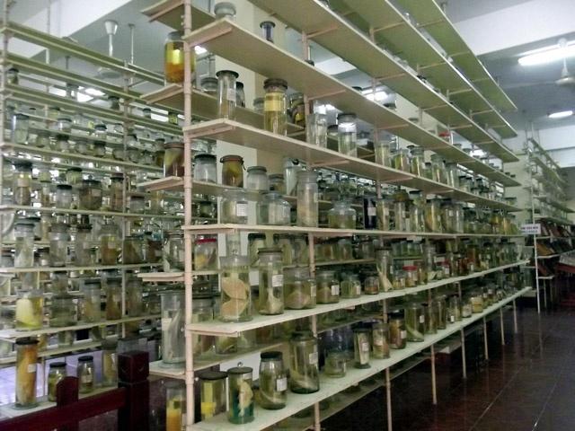 Tham bao tang sinh vat bien lon nhat Viet Nam hinh anh 8 Các mẫu vật được trưng bày.