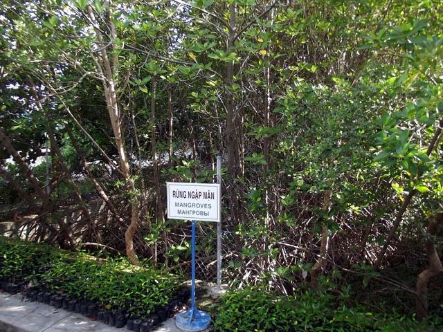 Tham bao tang sinh vat bien lon nhat Viet Nam hinh anh 10 Mô hình rừng ngập mặn