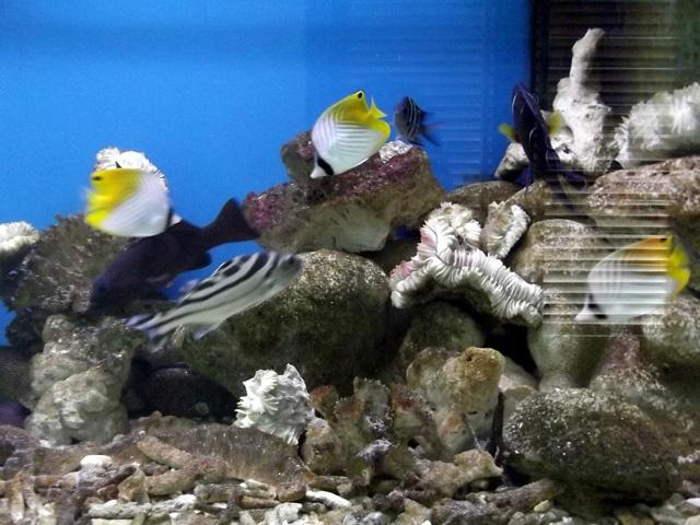 Tham bao tang sinh vat bien lon nhat Viet Nam hinh anh 4 Bảo tàng có hàng trăm loài sinh vật biển nhiệt đới.