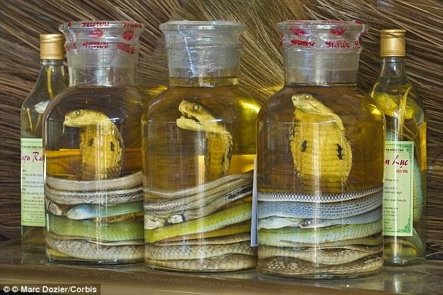 Cac mon an truyen thong kho nuot khap nam chau hinh anh 6 Rượu rắn được cho là có công dụng chữa bệnh tại các quốc gia Đông Nam Á.