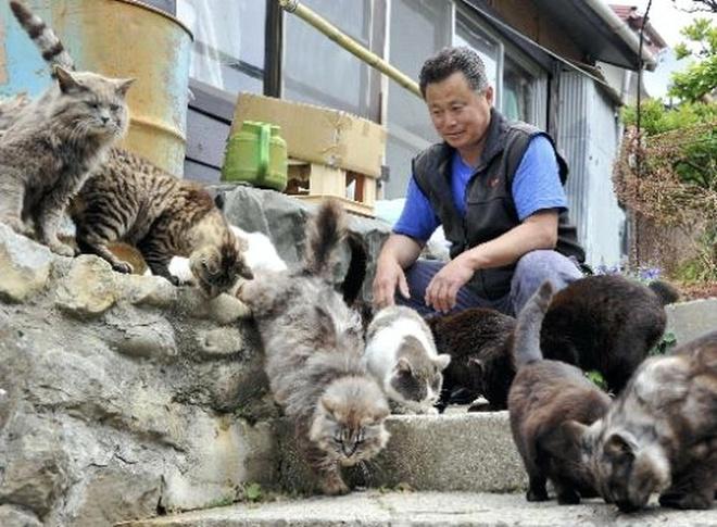 """Nhung dieu la lung o Nhat Ban (phan 3) hinh anh 10 Đảo mèo: Với dân số chỉ khoảng 100 người, đảo Tashirojima của Nhật đã trở thành """"đảo mèo"""" do lượng mèo hoang phát triển mạnh. Người dân nơi đây tin rằng việc cho mèo ăn sẽ đem lại sự giàu có và may mắn. Ở đây còn có đền thờ mèo và cuộc thi chụp ảnh mèo diễn ra hàng năm. Các du khách, đặc biệt là những người yêu loại thú cưng này, đổ về đây để được vuốt ve những chú mèo mập ú, thân thiện và không hề sợ ngư"""