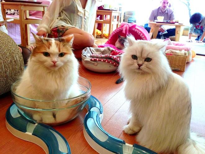Nhung dieu la lung o Nhat Ban (phan 3) hinh anh 5 Cà phê chó mèo: Các quán cà phê thú cưng rất phổ biến tại Nhật. Tại các quán cà phê này, khách hàng có thể vuốt ve, chơi đùa với những chú chó, mèo con… để giảm bớt căng thẳng sau một ngày làm việc vất vả.