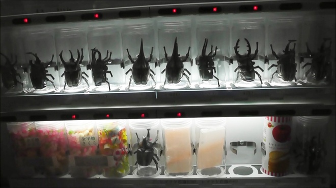 Nhung may ban hang tu dong ky la o Nhat Ban hinh anh 9 Máy bán bọ kiến vương: Bọ kiến vương là thú nuôi khá phổ biến ở Nhật. Các thanh niên thích sưu tầm và cho chúng đấu với nhau.
