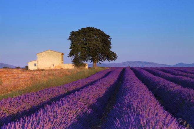 Phu Quoc vao top 20 diem trang mat tuyet nhat the gioi hinh anh 7 Provence, Pháp: Sự kết hợp của đồ ăn, ánh nắng và rượu vang cùng khung cảnh tuyệt đẹp khiến Provence là điểm đến mơ ước của nhiều cặp đôi. Nơi đây có những ngọn núi với đỉnh phủ tuyết trắng, những ngôi làng cổ kính nằm trên đồi và bãi biển Cote d'Azur... Các cặp đôi có thể lựa chọn nhiều hoạt động thú vị cho kỳ nghỉ của mình.