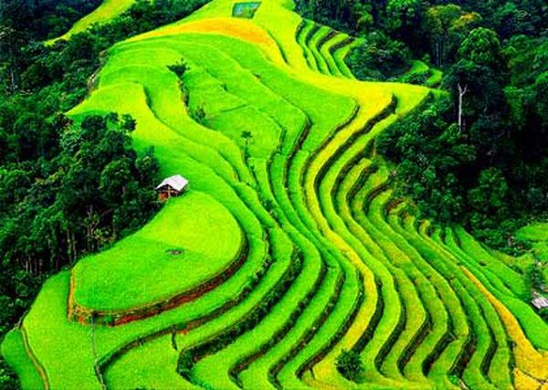 Ruong bac thang Viet Nam vao top 10 canh dep the gioi hinh anh