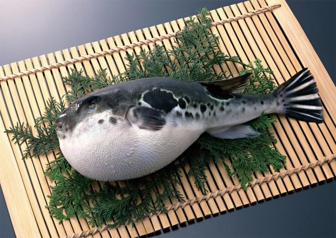 Nhung mon dac san co the gay chet nguoi hinh anh 1 Cá nóc (Nhật Bản): Nếu không chế biến đúng cách (loại bỏ hết phần gan và buồng trứng), thịt cá nóc có thể khiến người ăn mất mạng trong vòng vài tiếng. Để làm được các món từ cá nóc, đầu bếp ở Nhật phải thực tập tới 3 năm. Chợ bán cá nóc lớn nhất Nhật Bản là Shimonoseki, tuy ngày nay bạn có thể mua chúng trong siêu thị.
