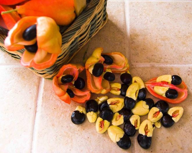 Nhung mon dac san co the gay chet nguoi hinh anh 7 Hạt Ackee (Jamaica): Phần màu đỏ và đen của loại hạt này rất độc, có thể gây chết người, phần màu vàng bên trong là một loại thức ăn phổ biến ở Jamaica. Nếu ăn phải phần màu đỏ và đen, bạn sẽ bị nôn mửa, co giật thậm chí tử vong do lượng đường trong máu giảm mạnh.