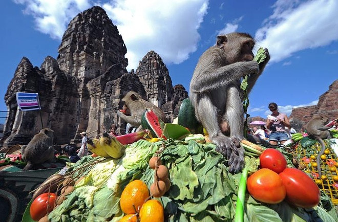 7 dieu la lung o Thai Lan hinh anh 4 Lễ hội khỉ: Mỗi năm ở đền Prang Sam Yot, Lop Buri, một trong những lễ hội lạ lùng nhất thế giới đã diễn ra: lễ hội cho khỉ ăn. Tới hai tấn thịt, hoa quả, bánh kẹo được bày ra cho hàng trăm con khỉ sống trong đền và khắp thành phố ăn.