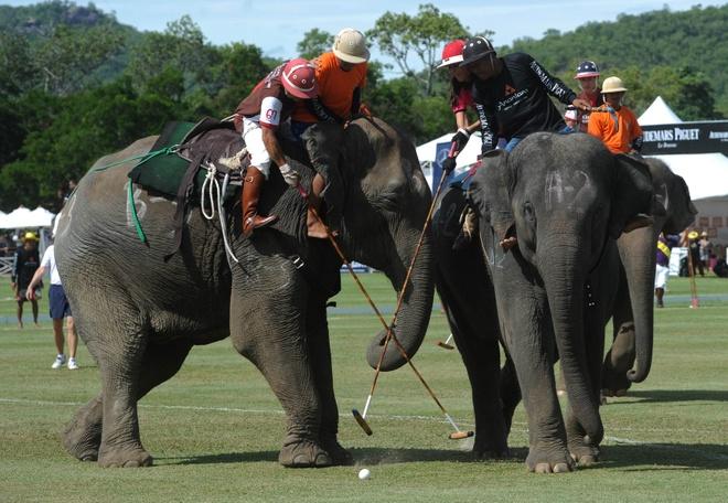 7 dieu la lung o Thai Lan hinh anh 8 Môn polo cưỡi voi: Đây là môn thể thao nổi tiếng ở Thái Lan. Những chú voi được huấn luyện đặc biệt cho môn này.