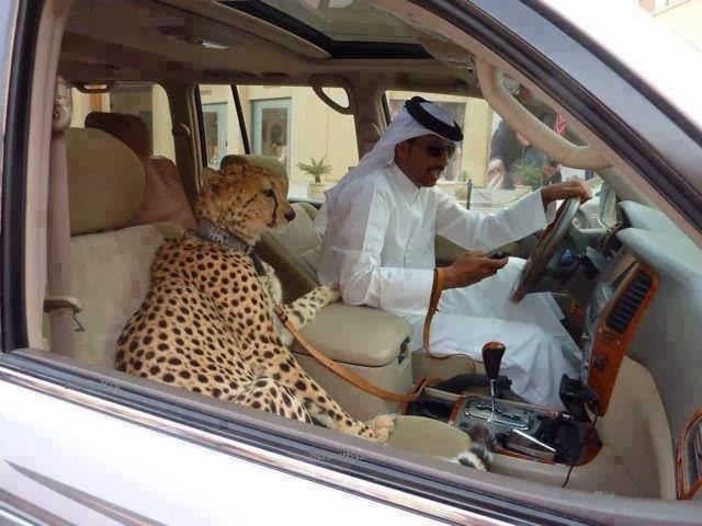 Nhung dieu dien ro the hien su giau co cua Dubai hinh anh