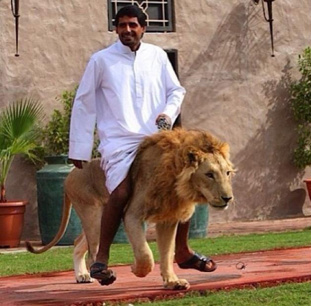 Cưỡi sư tử là thú vui: Giới nhà giàu rất chuộng nuôi sư tử vì nó là biểu tượng của sự vương giả, sức mạnh và lòng can đảm. Giá một con sư tử con vào khoảng từ <abbr class=