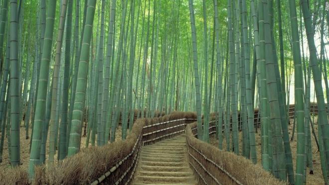 Nhung canh dep me hon o Nhat Ban hinh anh 11 Sagano (Kyoto): Được coi là một trong những khu rừng đẹp nhất thế giới, những cây tre xanh mướt đung đua trong gió tạo cho nơi này một không khí huyền ảo, thần tiên.