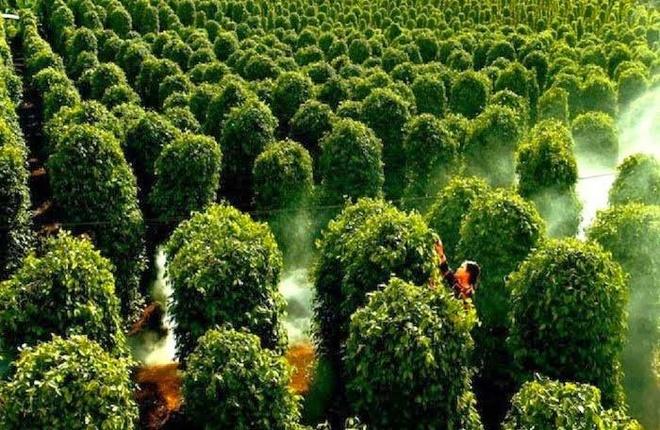 Nguoi Viet thich di dau nhat? hinh anh 17 Điểm tham quan nổi bật ở Phú Quốc gồm mũi Dinh Cậu, suối Tranh, Bãi Dài,  Hòn Thơm, vườn tiêu.