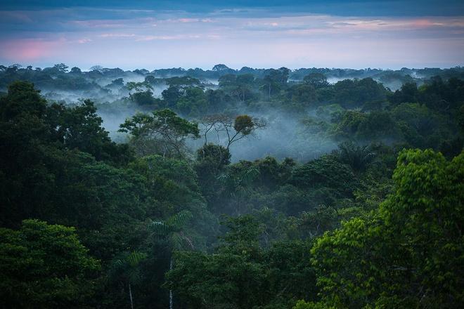 Nhung dieu ky la trong rung Amazon hinh anh 2 Bóng tối: Ở nhữngnơi rậm rạp nhất Amazon, tán rừng rất dày và che mất 99 % ánh sáng mặt trời, khiến mặt đất tối đen và trở thành nơi sinh sống của các động thực vật độc đáo. Đồng thời, với hiện tượng này, Amazon và các khu rừng nhiệt đới khác giúp điều hòa nhiệt độ của trái đất.