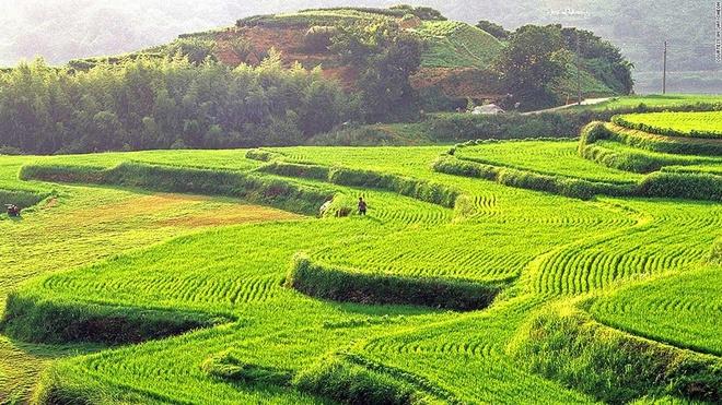 Nhung canh dep me hon o Han Quoc hinh anh 18 Hapcheon Daraknon: Những thửa ruộng bậc thang của Hapcheon ở phía nam tỉnh Gyeongsang tạo ra một khung cảnh tuyệt vời.