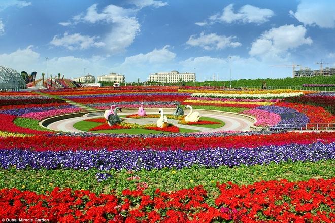 Vườn Miracle được công nhận là vườn hoa lớn nhất thế giới, nằm ở khu Arabian Ranches của Dubai - thành phố nổi tiếng với những công trình nằm ngoài sức tưởng tượng.