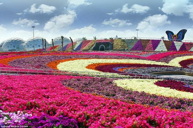 Hiện tại, vườn có khoảng 45 loại hoa được nhập khẩu từ khắp nơi trên thế giới.