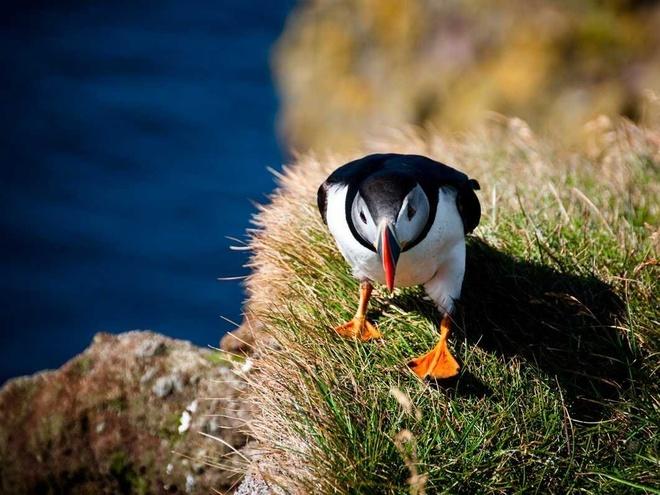 Đảo Surtsey, Iceland: Hòn đảo có diện tích 1,4 km2 này là nơi sinh sống của nhiều loài chim như hải âu, mòng biển và chim puffin. Chỉ có các nhà nghiên cứu mới được phép tới và ở trên hòn đảo này.
